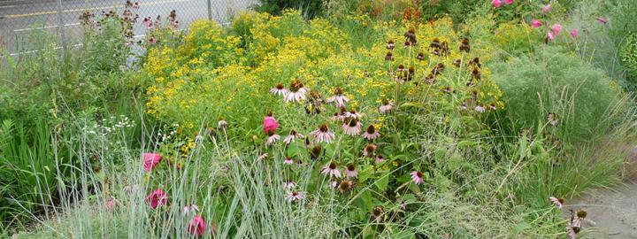 Green Stormwater Infrastructure Tools – Rain Garden Plants