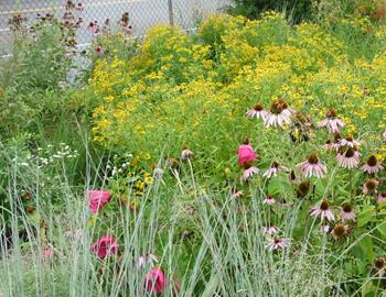 Rain Garden At Liberty Lands