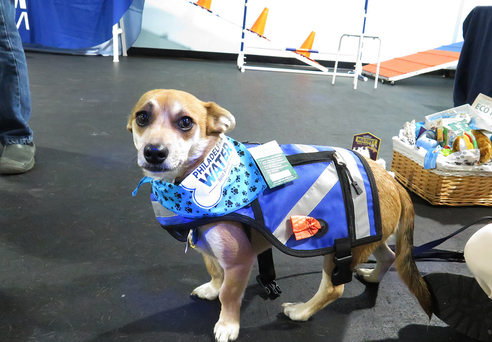 Meet Shorty, our latest anti-POOllution Spokesdog. Nothing makes him more upset than seeing pet waste that's been left on the street to wash into our rivers—his (and our) drinking water source! Credit: Philadelphia Water/Partnership for the Delaware Estuary