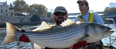 Joe Perillo and Lance Butler of Philadelphia Water with a monster striped bass. Credit: Philadelphia Water.
